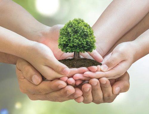 Etiquetas que cuidan los bosques y el medioambiente
